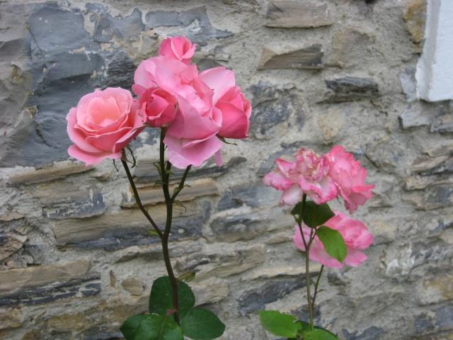 Mi Rincón de Rosas - Página 2 Img_0724