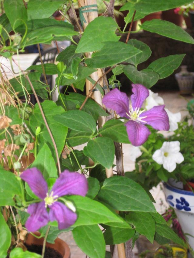 Julio en flor Img_0734