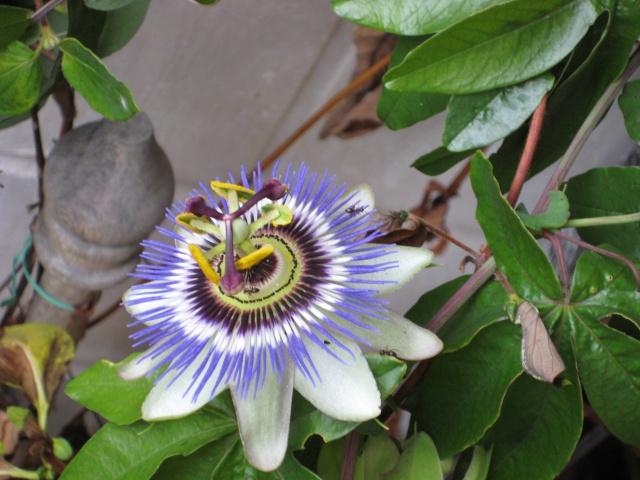 Julio en flor Img_0735