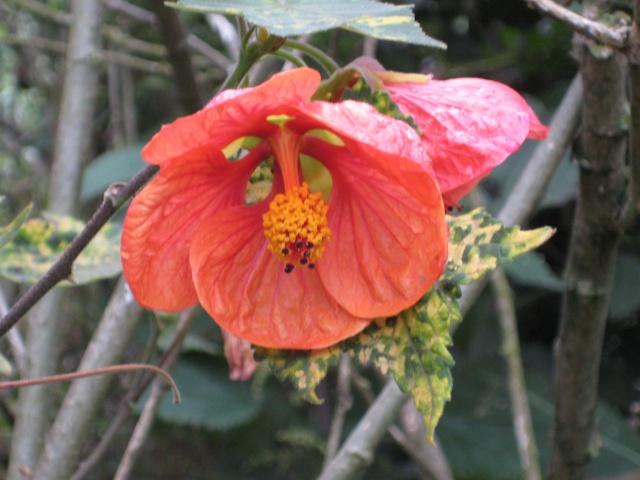 Julio en flor Img_0736