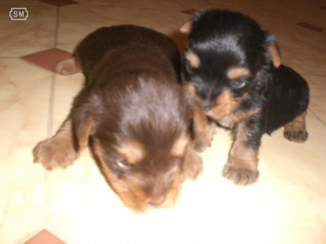 por fin.... ya tenemos un cachorro 03105910