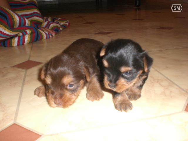 por fin.... ya tenemos un cachorro 03141510