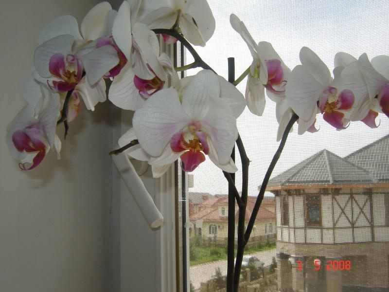 Разведение орхидей. - Страница 2 10481014