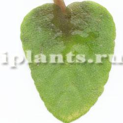 Гнили растений All-bo10
