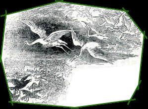 Légendes de cigognes..... Cigogn10