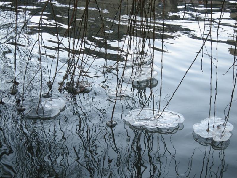 La Mossig , notre rivière Fleurs10