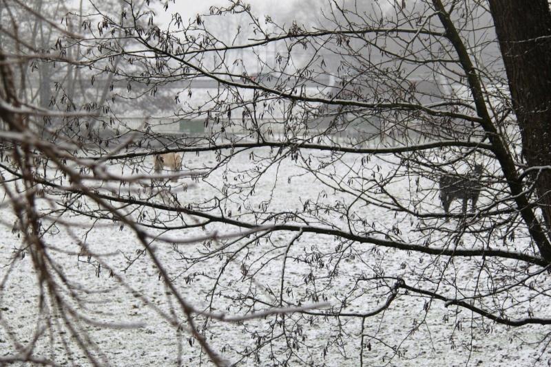 Neige du 29 janvier 2012 sur Wangen Img_0041
