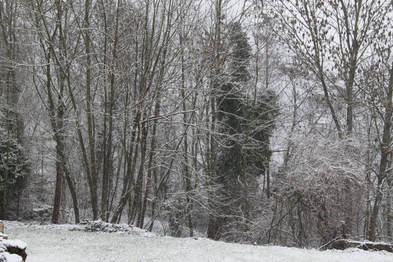 Neige du 29 janvier 2012 sur Wangen Img_0050