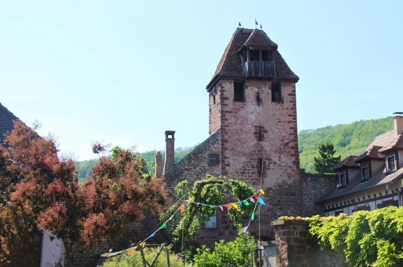 Wangen , fête annuelle du Freihof , 17 mai 2012 Img_0053