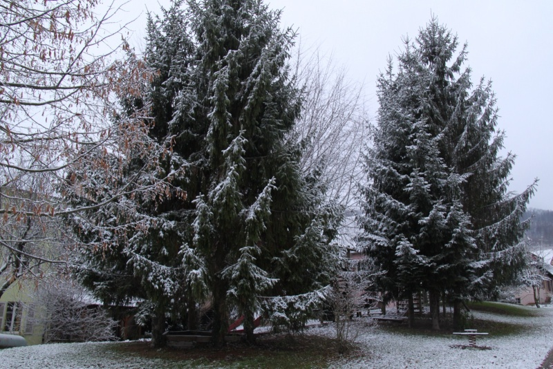 Premiers flocons de neige de décembre 2012 sur  Wangen Img_0724