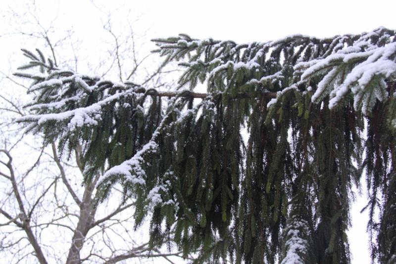 Premiers flocons de neige de décembre 2012 sur  Wangen Img_0728