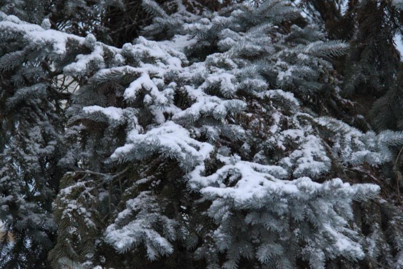 Premiers flocons de neige de décembre 2012 sur  Wangen Img_0729