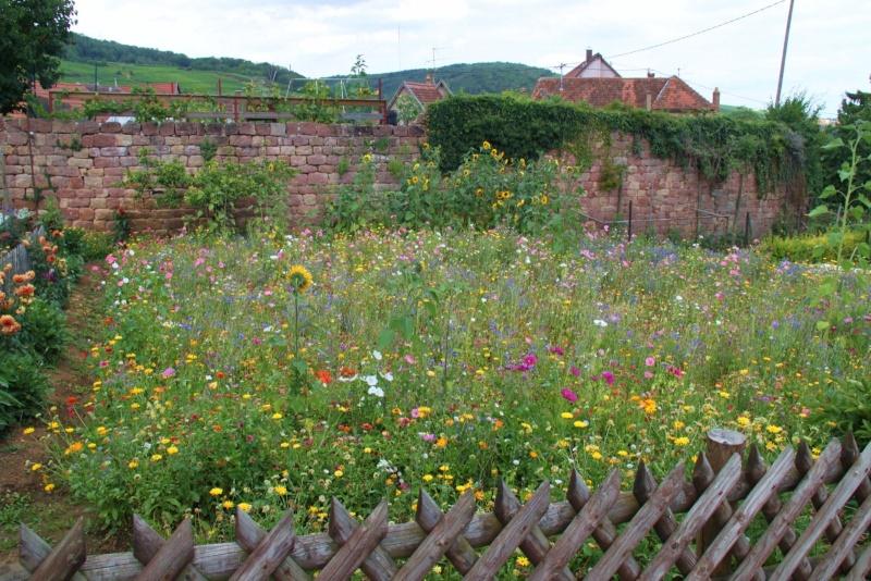 Fleurs de Wangen ,été 2012 ! Img_2126