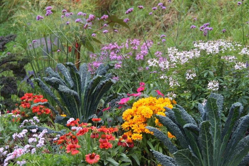 Fleurs de Wangen ,été 2012 ! Img_2128