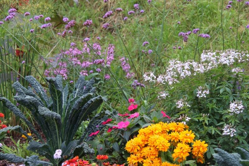 Fleurs de Wangen ,été 2012 ! Img_2129