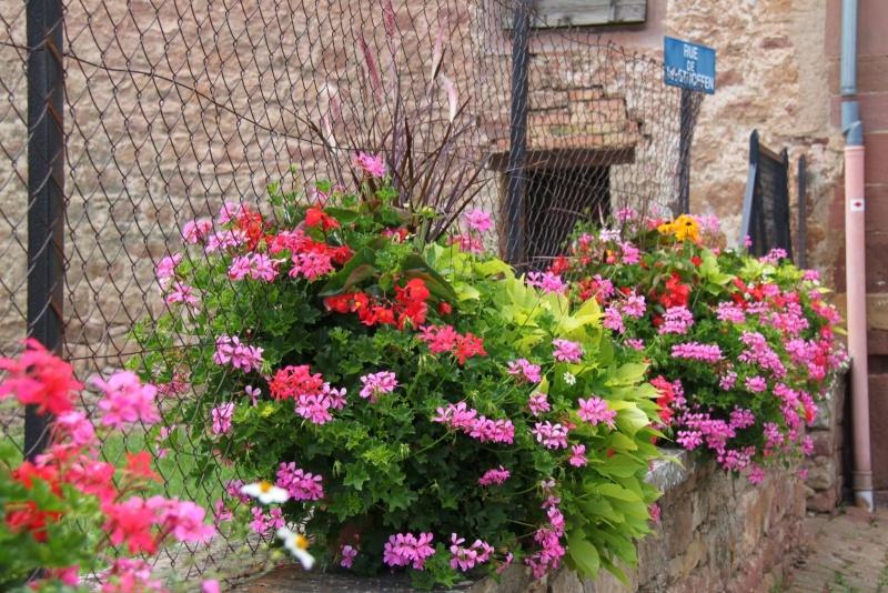 Fleurs de Wangen ,été 2012 ! Img_2133