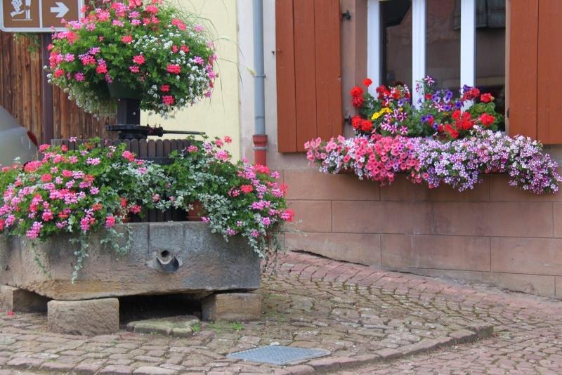 Fleurs de Wangen ,été 2012 ! Img_2134