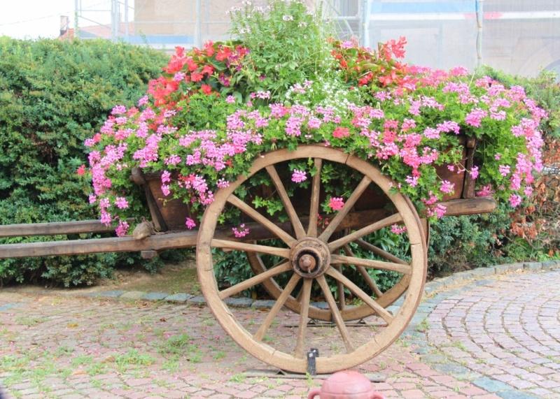 Fleurs de Wangen ,été 2012 ! Img_2135