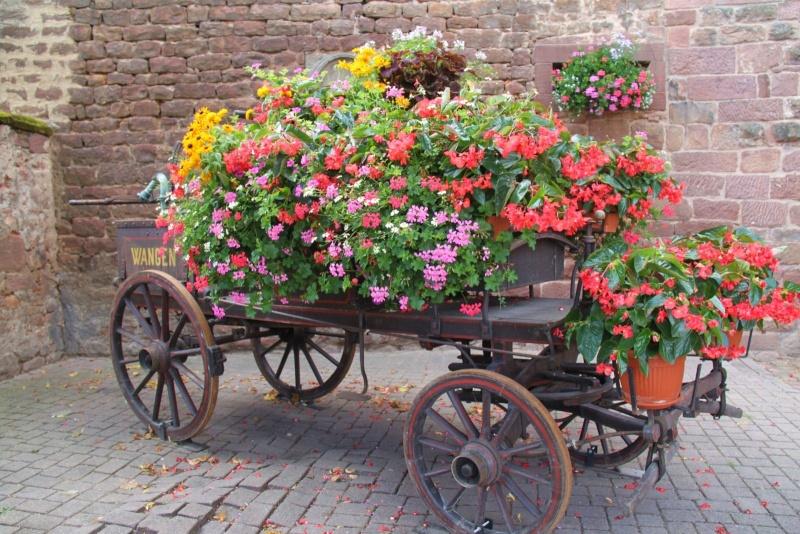 Fleurs de Wangen ,été 2012 ! Img_2136