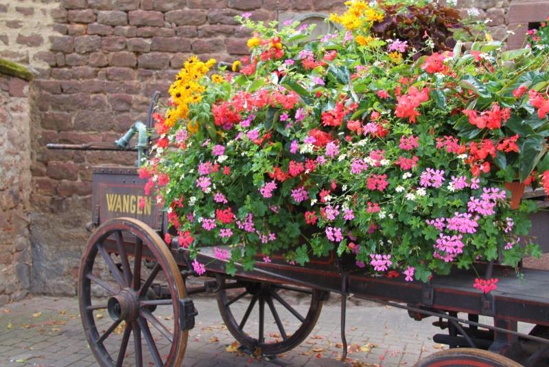 Fleurs de Wangen ,été 2012 ! Img_2137