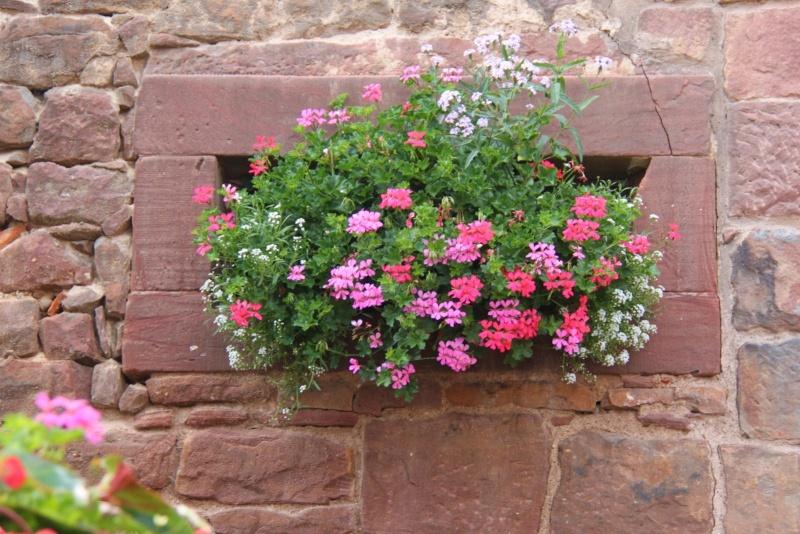 Fleurs de Wangen ,été 2012 ! Img_2138