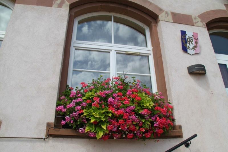 Fleurs de Wangen ,été 2012 ! Img_2143