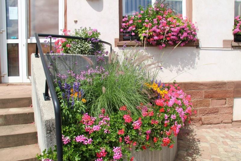 Fleurs de Wangen ,été 2012 ! Img_2144