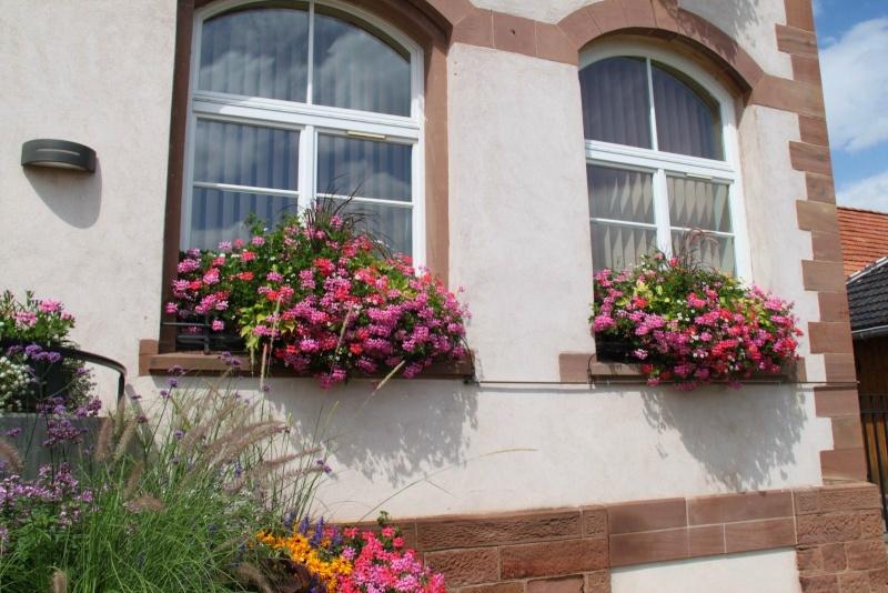 Fleurs de Wangen ,été 2012 ! Img_2145