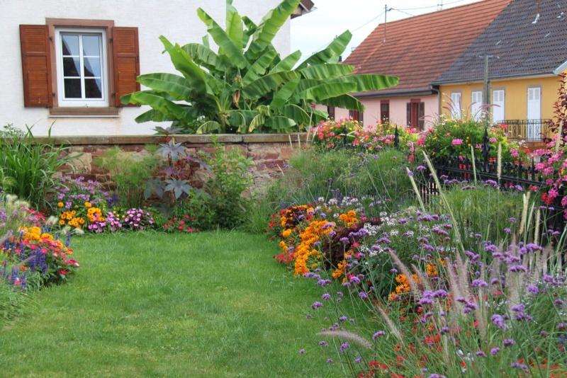 Fleurs de Wangen ,été 2012 ! Img_2210