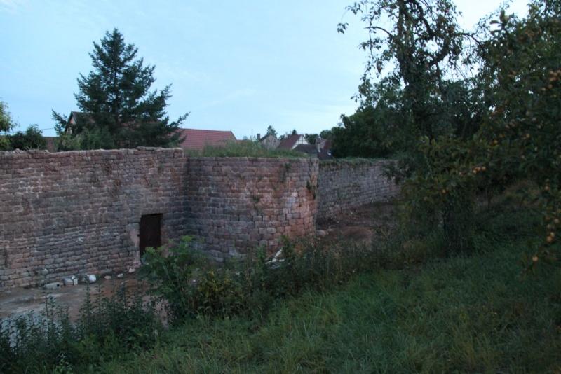 Chantier d'insertion pour la restauration du mur d'enceinte de Wangen - Page 2 Img_2219