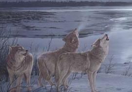 Wolves RP