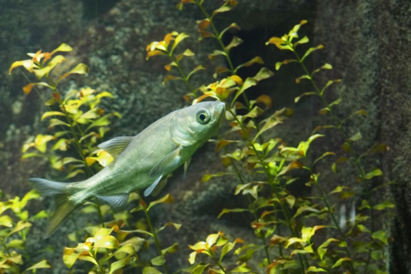 Aquarium de tourraine E5m10318