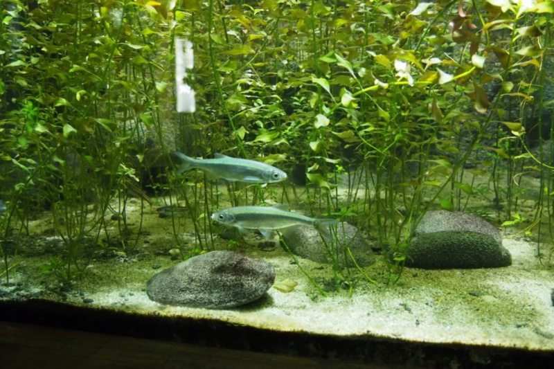 Aquarium de tourraine E5m10322