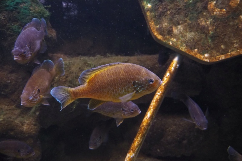 Aquarium de tourraine E5m10323