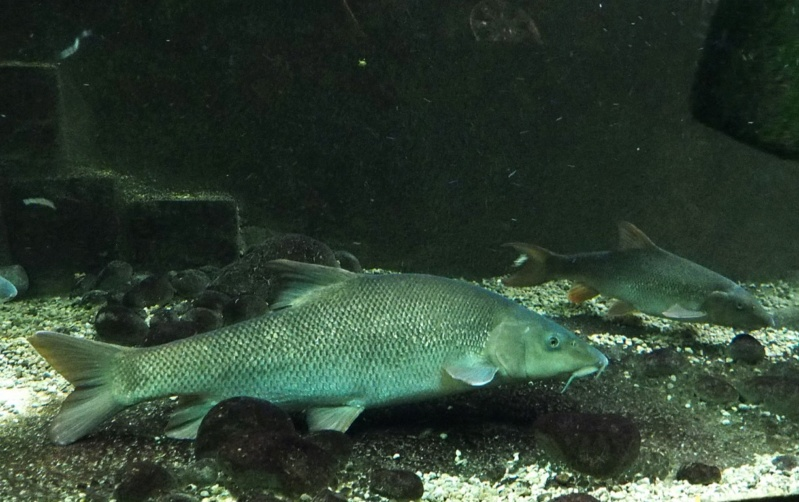 Aquarium de tourraine E5m10324
