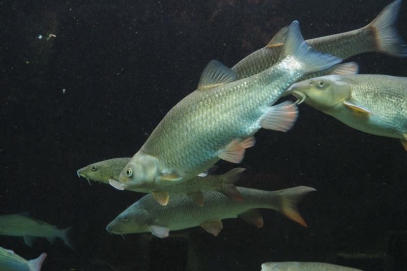 Aquarium de tourraine E5m10325
