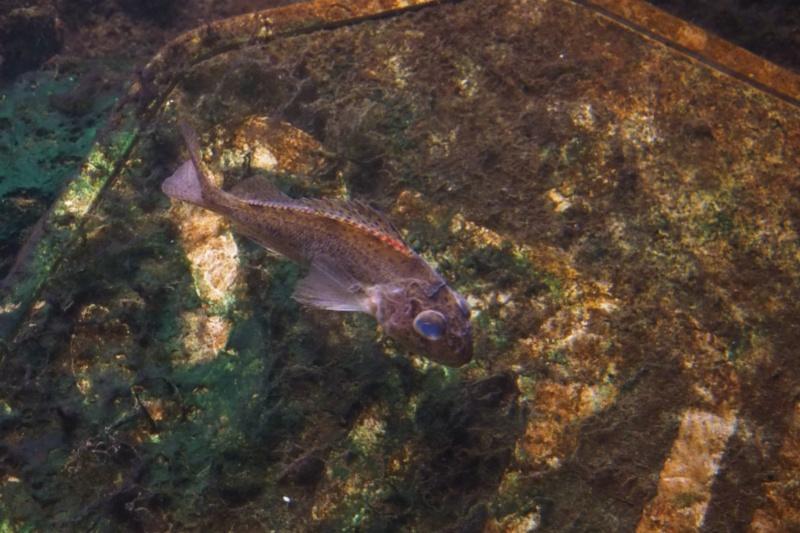 Aquarium de tourraine E5m10326