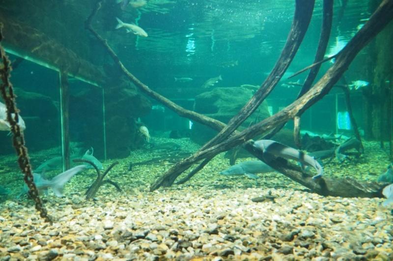 Aquarium de tourraine E5m10329
