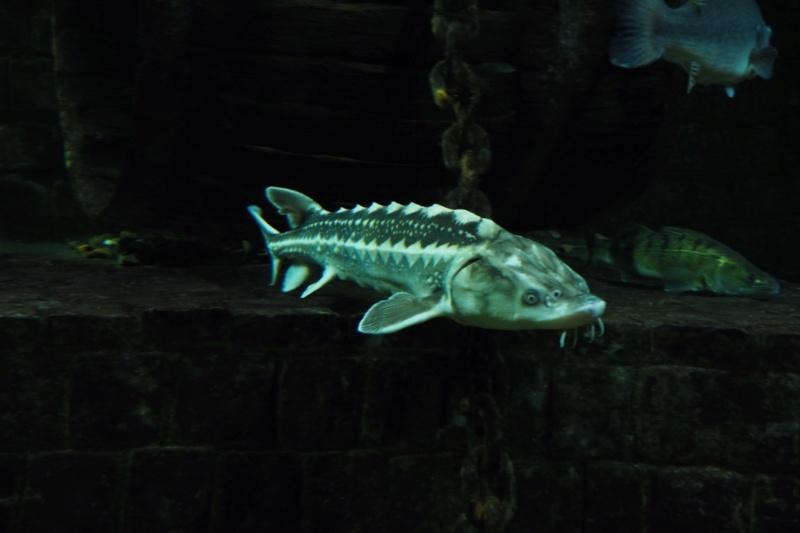 Aquarium de tourraine E5m10333