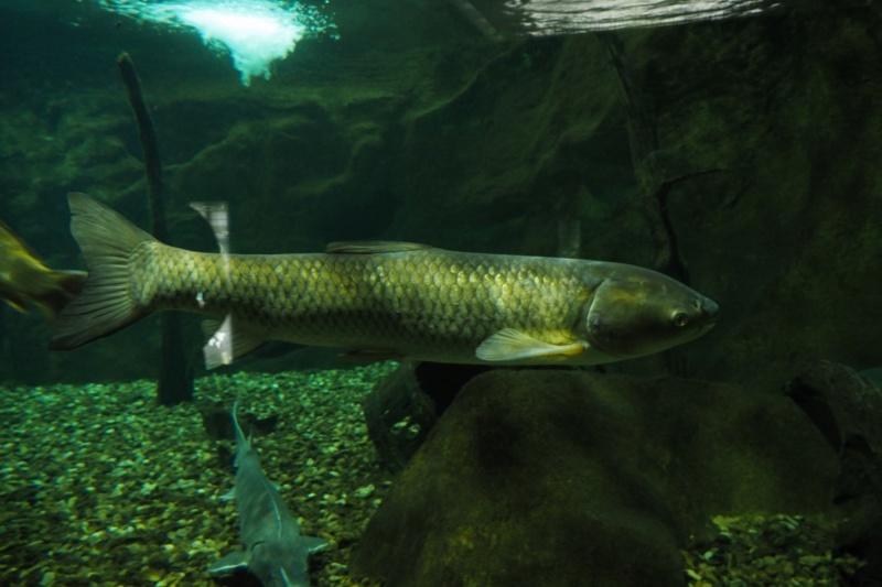Aquarium de tourraine E5m10334