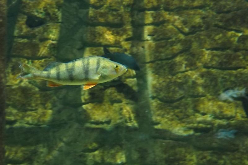 Aquarium de tourraine E5m10337