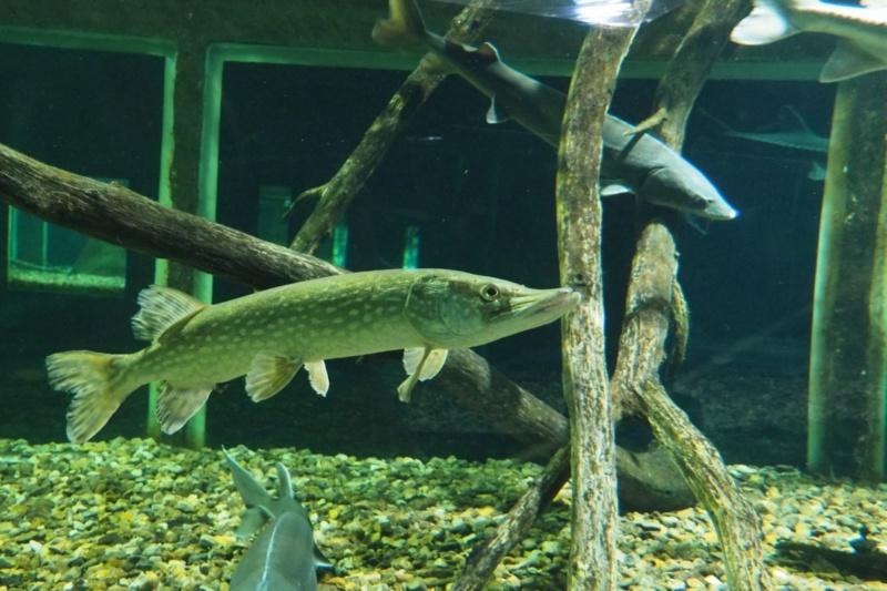 Aquarium de tourraine E5m10338