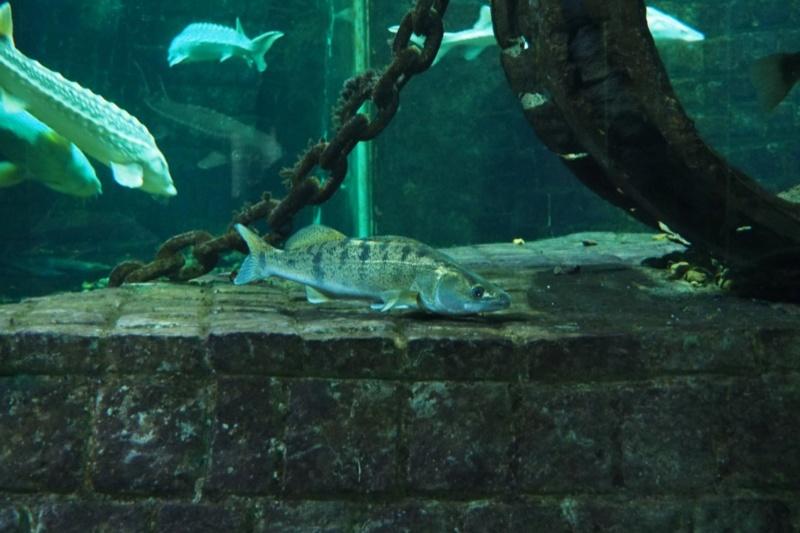 Aquarium de tourraine E5m10340