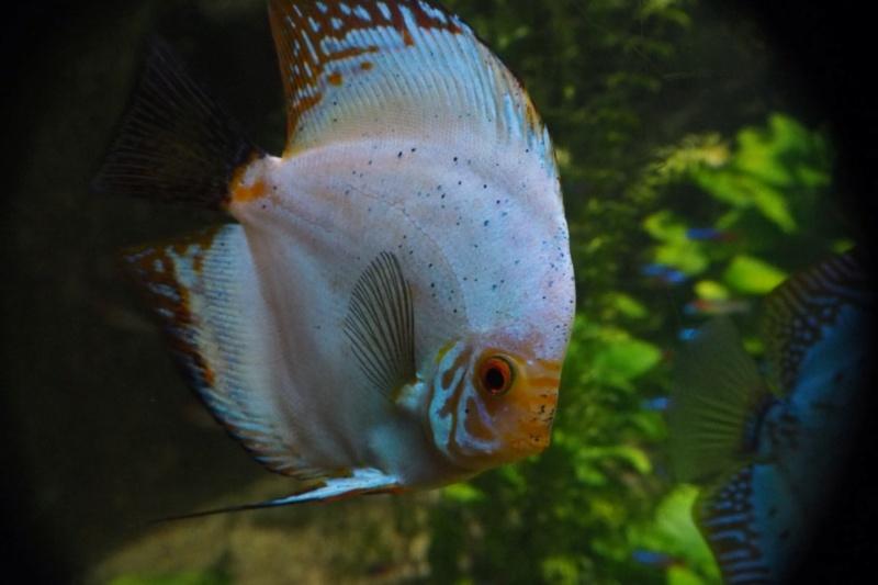 Aquarium de tourraine E5m10412