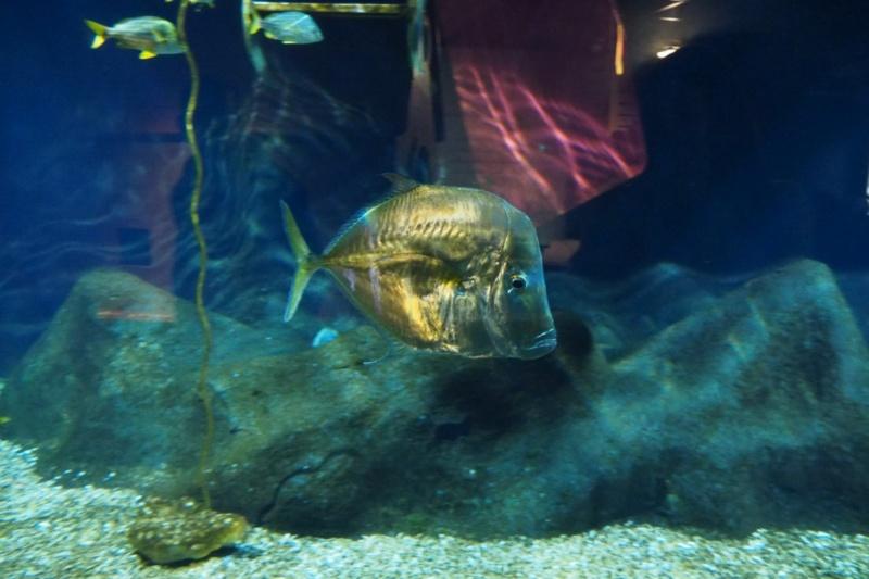 Aquarium de tourraine E5m10417