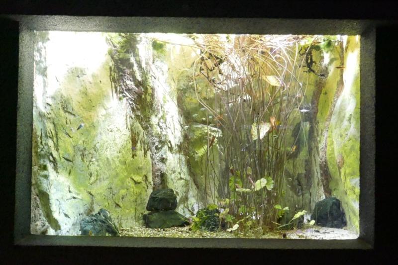 Aquarium de la porte dorée P1010512