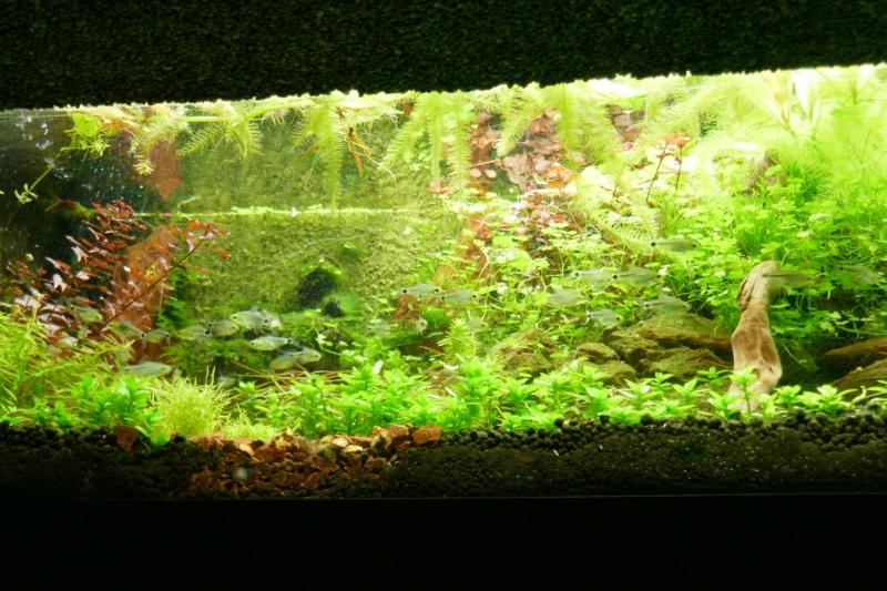 Aquarium de la porte dorée P1010514
