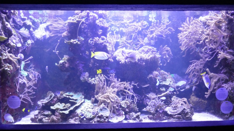 Aquarium de la porte dorée P1010515