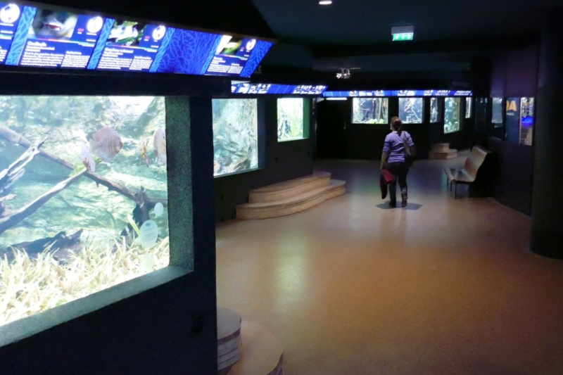 Aquarium de la porte dorée P1010610