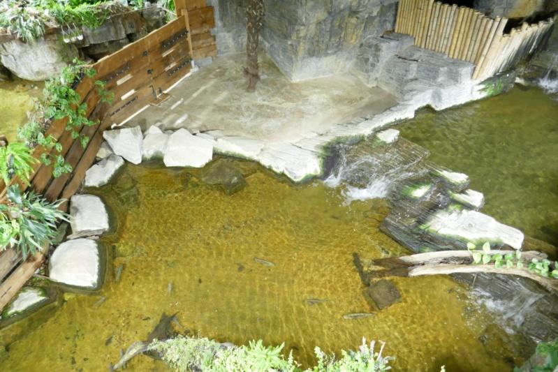 Aquarium de la porte dorée P1010612